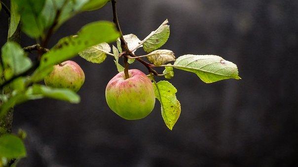 Apple, Nature, Fruit, Healthy, Fresh, Mood, Mature