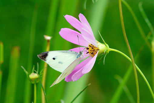 Butterfly, Flower, Nature, Honey, Summer, Insect