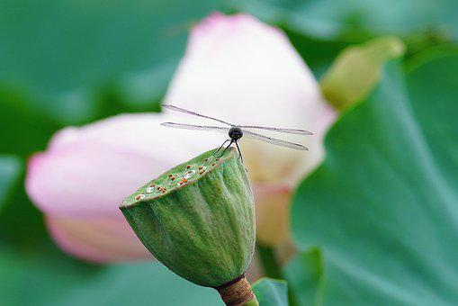Dragonfly, Flower, Nature, Honey, Summer, Insect