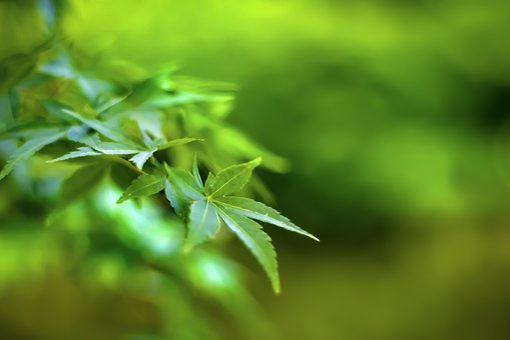 Fresh Green, Leaves, Leaf, Natural, Plant, Green, Japan