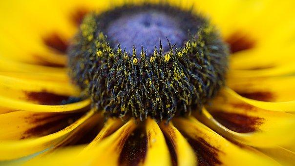 Coneflower, Pollen, Macro, Close Up, Microcosm, Pattern