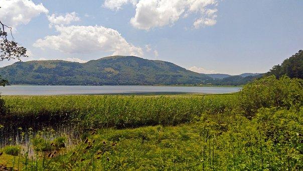Abant, Bolu, Forest, Nature, Lake, Landscape, Tree