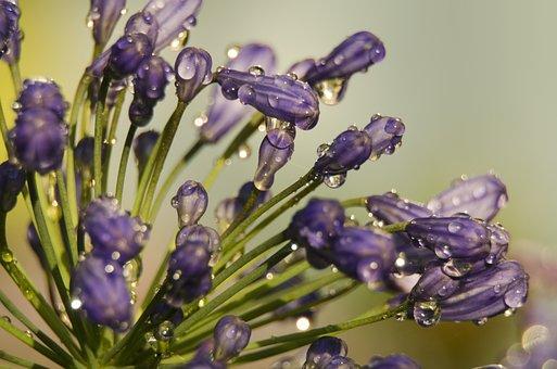 Flower, Bud, Nature, Water, Flowers, Waterpolo, Garden