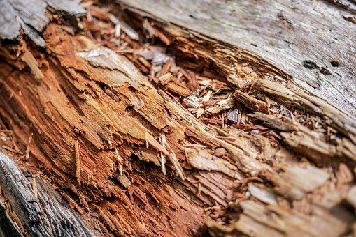 Touchwood, Tree, Old, Texture, The Bark, Nature