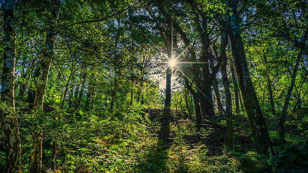 Light, Backlighting, Nature, Shadow, Sun, Forest, Trees