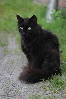 Cat, Predator, Nature, Portrait, Feline, Kitten, Street