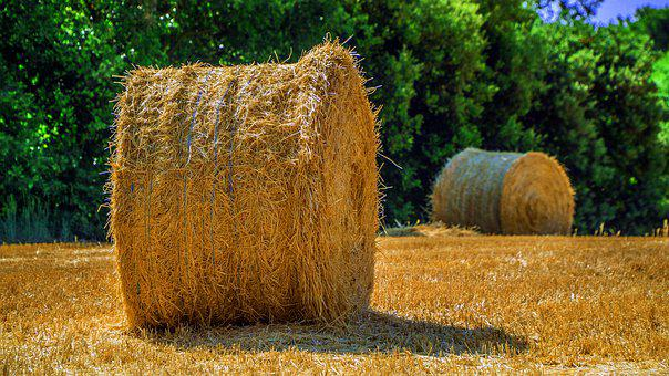 Agriculture, Harvest, Field, Cultivation, Summer, Straw