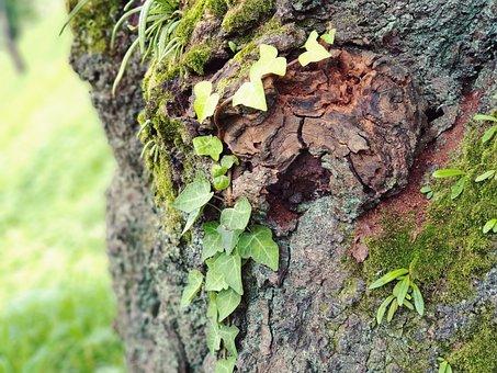 Wood, Garden, Plants, Nature, Green, Summer, Forest