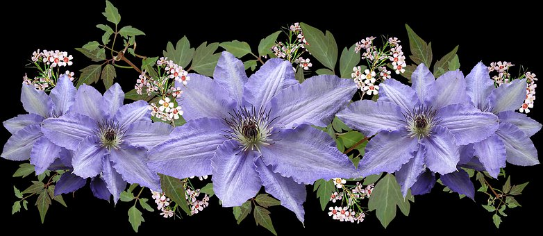 Flowers, Mauve, Clematis, Wax Flowers, Arrangement