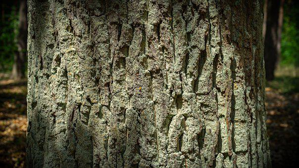 Bark, Tribe, Tree, Wood, Structure, Deciduous Tree