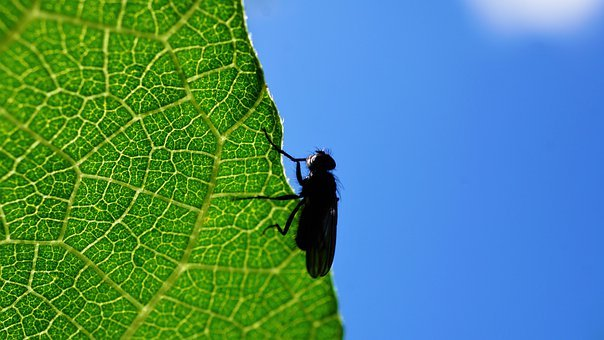 Fly, Insect, Leaf, Macro, Animal World, Animal