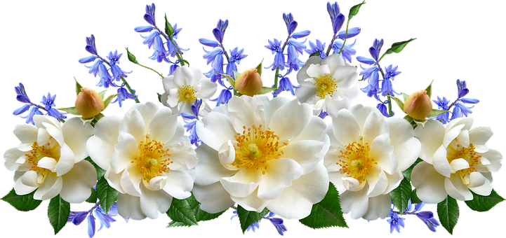Flowers, White, Roses, Bluebells, Arrangement
