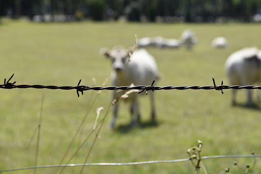 Barbed Wire, Wire, Metal, Demarcation, Close, Security