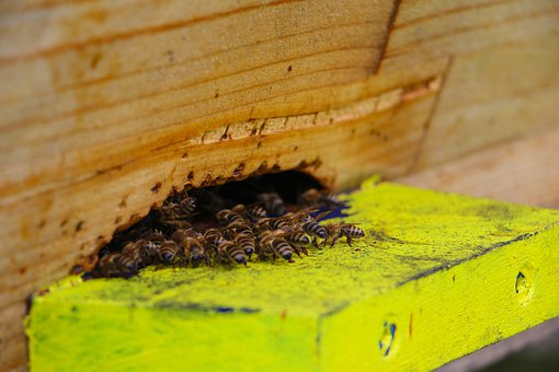 Bees, Air Hole, Insect, Beehive, Flight Board