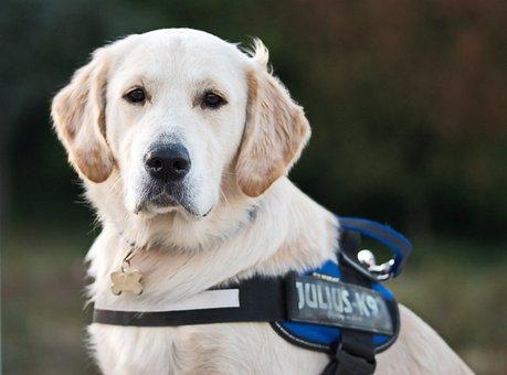 Dog, White, Beige, Leash, The Award-winning