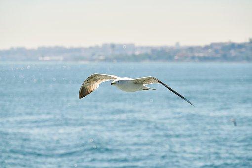 Seagull, Bird, Flying, Animal, White, Spring, Freedom