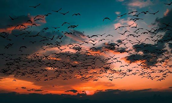 Sunset, Birds, Landscape, Silhouette, Sky, Flying