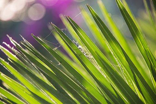 Leaves, Nature, Green, Plant, Botany, Garden, Summer