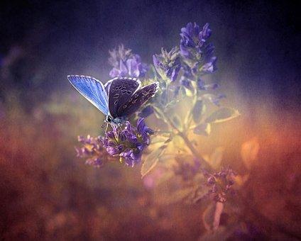 Blue, Flower, Lavender, Blossom, Butterfly, Nature