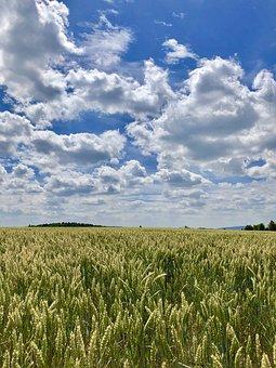 Cornfield, Summer, Cereals, Field, Harvest, Barley