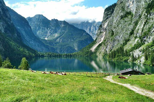 Fischunkelalm, Upper Lake, Cows, Alm, Königssee