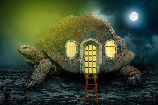 Manipulation, Turtle, Tortoise, Cloud, Dark, Moon, Full