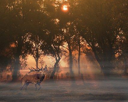 Nature, Wildlife, Sunset, Evening, Deer, Landscape