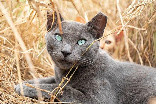 Cat, Green Eyes, Kitten, Pet, Animal, Eyes, Eye, Green