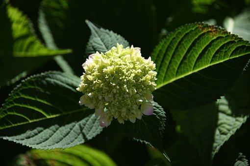 Flower, Blossom, Petal, Garden, Summer, Botanical, Bush