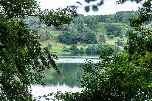 Forest, Lake, Natural, Green, Leaves, Landscape, Trees