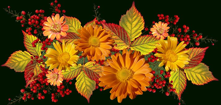 Flowers, Daisies, Leaves, Autumn, Colors, Arrangement