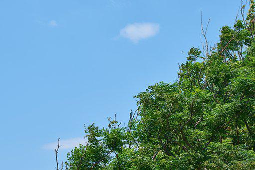 Tree, Sky, Blue, Green, The Leaves Are, Forest, Nature