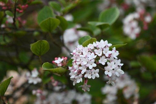 Flower, Blossom, Petal, Garden, Summer, Botanical, Pink