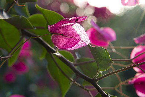 Fiore, Nature, Flower, Plant, Petals, Summer, Leaves