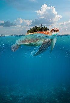 Turtle, Ocean, Island, Underwater, Sea, Wildlife