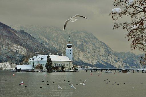Castle Orth, Winter, Seagull, Bird, Nature, Water, Lake