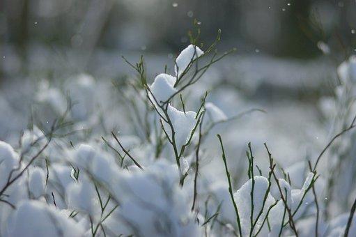 Snow, Forest, Fleece, Christmas, Peace Of Mind