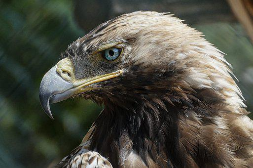 Eagle, Jungle, Summer Bird, Wildlife, Tropical, Wild