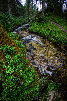 Forest, Vegetation, Alps, Mountain, Trail, Rio, Torrent