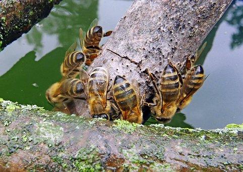 Nature, Water, Bee General, Power