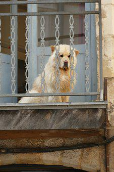 Dog, Pet, Mammal, Coat, White, Hot, Balcony, Fence
