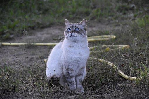 Cat, Alley Cat, European Cat, Cat Nala, Cat Sitting