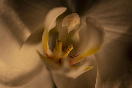 Orchid, Flower, Close-up, Macro, Nature, Room Flower