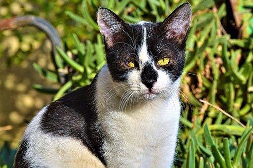 Cat, Different Eyes, Cute, Pet, Animal, Eyes, Mammal