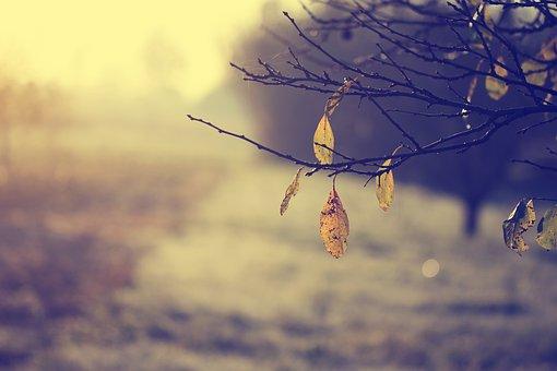 Fall, Autumn, Forest, Nature, Sunset, Foliage, Plant