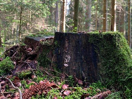 Tree Stump, Forest Landscape, Green, Rest, Meditation