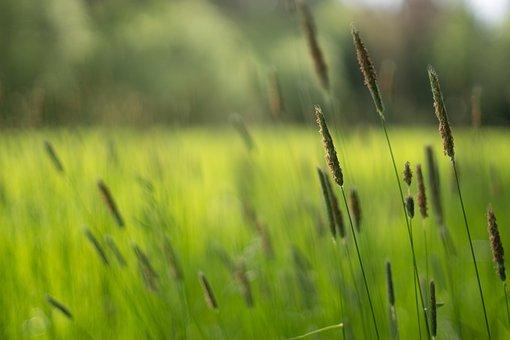 Field, Nature, Plant, Garden, Flora, Agriculture, Farm