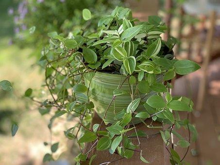 Plant, Garden, Nature, Green, Flora, Leaves, Gardening