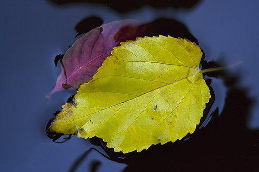 Autumn, Leaf, Yellow, Fall, Water, October, Nature