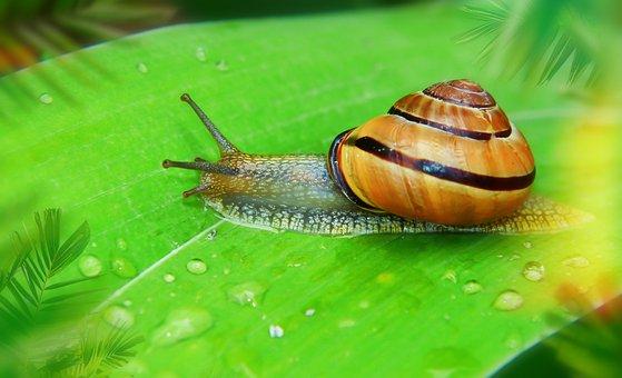 Wstężyk Huntsman, Leaf, Drops Of Water, Rain, Slide